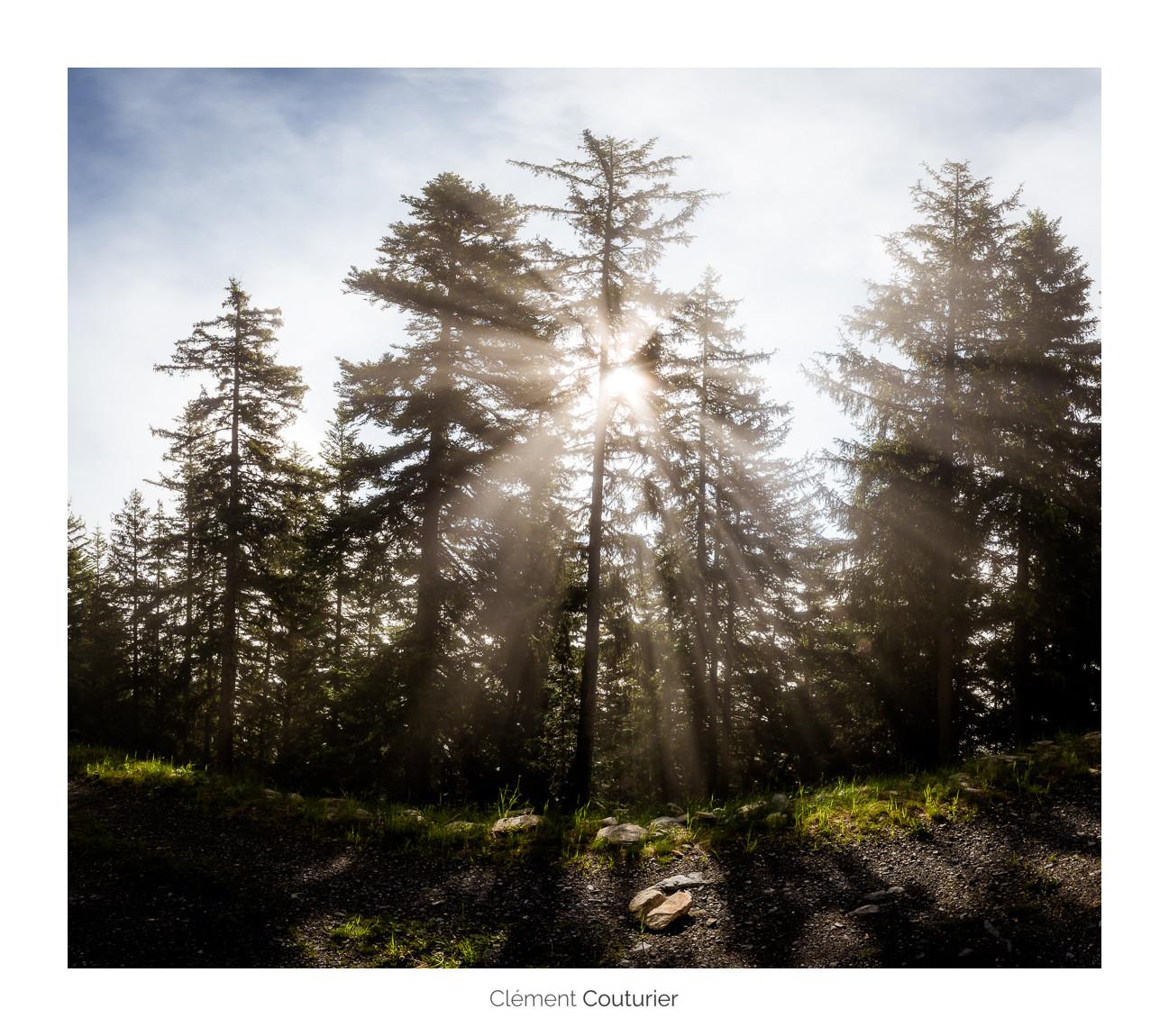 Soleil et arbres - Clément Couturier